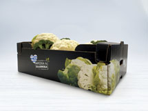 Strong expertise in manufacturing agricultural packaging for fruits and vegetables
